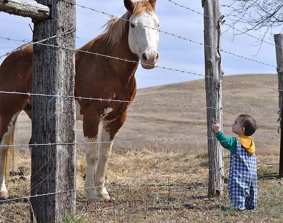 goo-and-horse